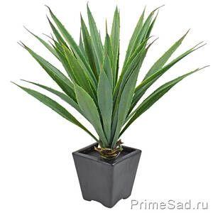 """Декоративное растение """"Драцена в черном горшке"""""""