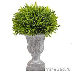 Декоративное растение в сером кашпо
