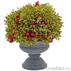 Декоративное растение в кашпо Брусника