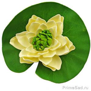 Декоративное растение Водяная лилия кремовая 20