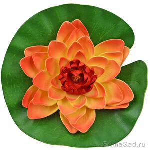Декоративное растение Водяная лилия оранжевая 20