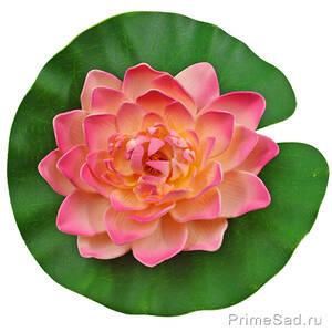 Декоративное растение Водяная лилия розовая 20