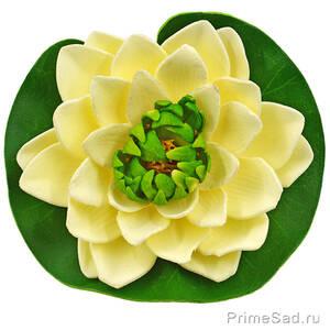 Декоративное растение Водяная лилия кремовая 14.5