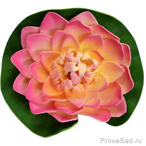 Декоративное растение Водяная лилия розовая 14.5