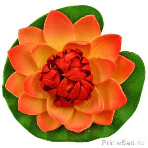 Декоративное растение Водяная лилия оранжевая 10.5