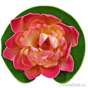 Декоративное растение Водяная лилия розовая 10.5