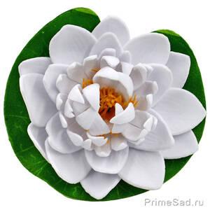 Декоративное растение Водяная лилия белая 10.5